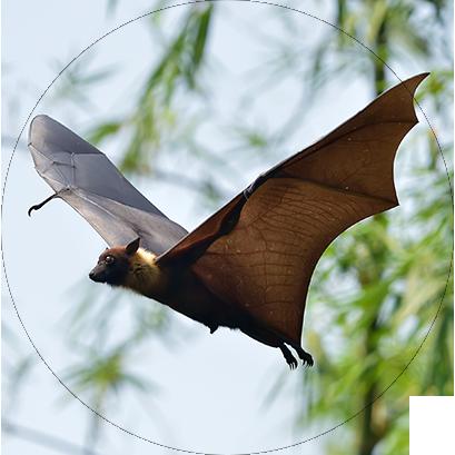 Morcegos - Sobre os Morcegos