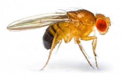 A dedetização de moscas é o método para se livrar deste inseto
