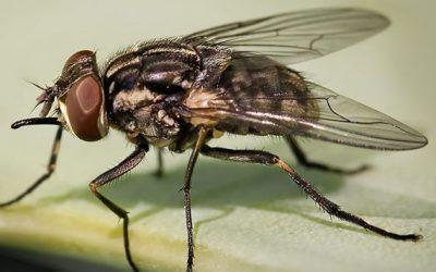 10 dicas essenciais para se prevenir das moscas