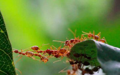Prevenção após a dedetização de formigas: Conheça técnicas infalíveis