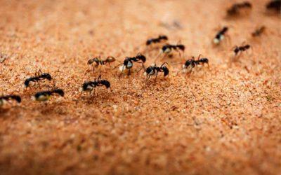 Problemas com formigas na cozinha? Saiba O Que Fazer!