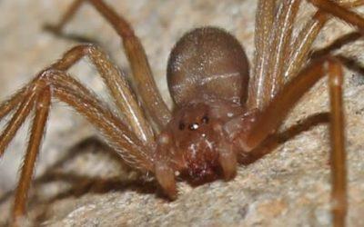 Dedetização de aranha: Saiba como Funciona!