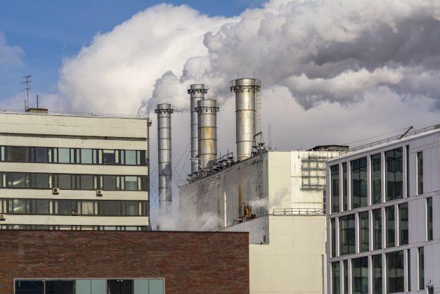 Controle de Pragas em Fábricas: conheça os principais tratamentos