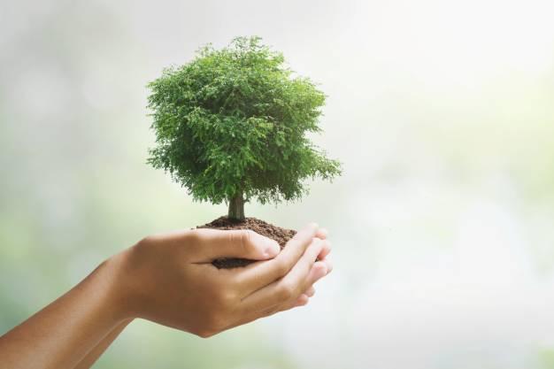 Uma Empresa de Controle de Pragas também é uma agente de saúde ambiental
